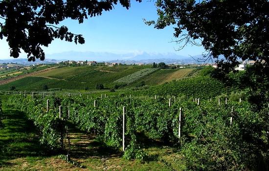 le vin en Italie