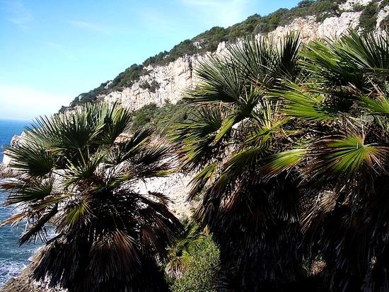 Palmier Nana dans le parc du Circé
