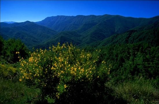 Haute Vallée du Bidente en Italie