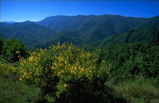 Forêt de Casentino