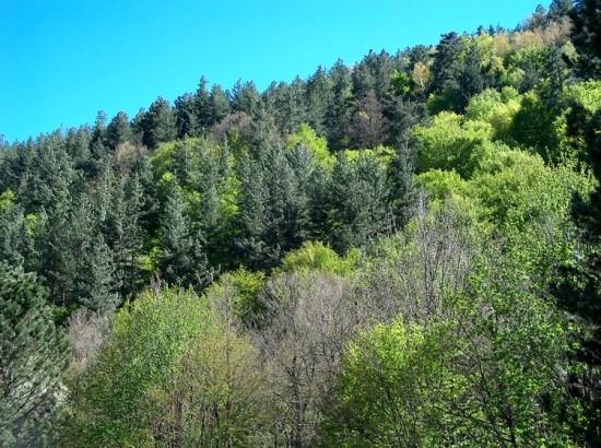 Forêt de la Sila