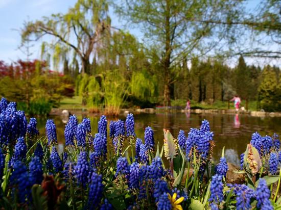 Parc et jardins de Sigurtà